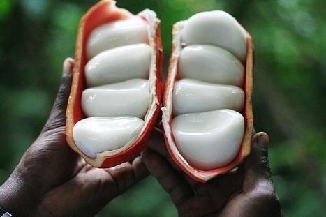 Tayap, premier village écologique du Cameroun | Nouveaux paradigmes | Scoop.it