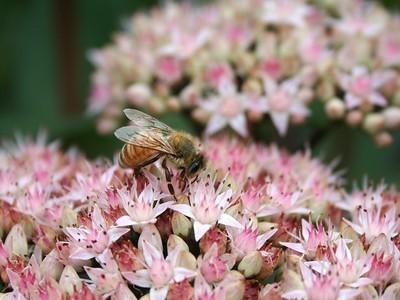 Bees Prefer Working Class Gardens Over Affluent Gardens | Vertical Farm - Food Factory | Scoop.it