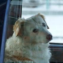 Une policière contraint une femme à rester enfermée dans sa voiture comme son chien | animals rights and protection | Scoop.it