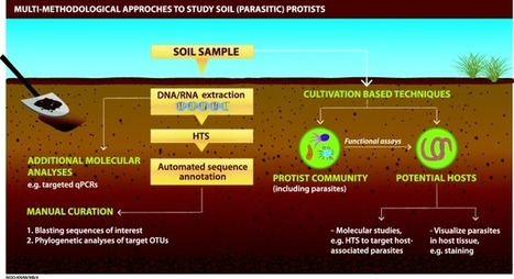 Thorough high-throughput sequencing analyses unravels huge diversities of soil parasitic protists | MycorWeb Plant-Microbe Interactions | Scoop.it