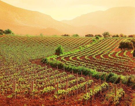 Ritorno alla terra: i nuovi imprenditori agricoli con laurea e cravatta | Gli alberi nei giardini | Scoop.it
