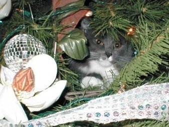 A Cats Christmas | Fun Facts: Pre Lit Artificial Christmas Trees Walmart Has | Scoop.it