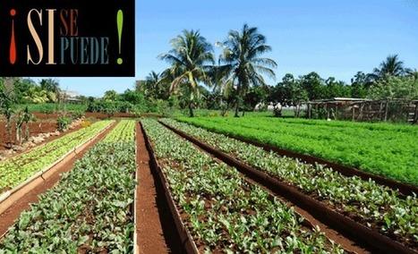 ¡Sí se puede! | Agriculture urbaine, architecture et urbanisme durable | Scoop.it
