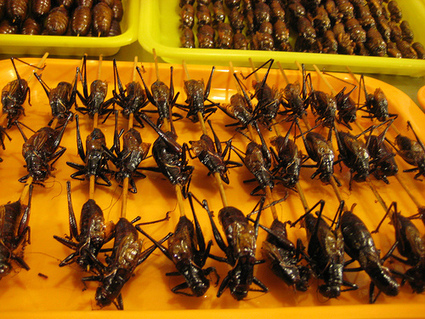 Robb Wolf - True Paleo Protien: Insects | eating insects = win | Scoop.it