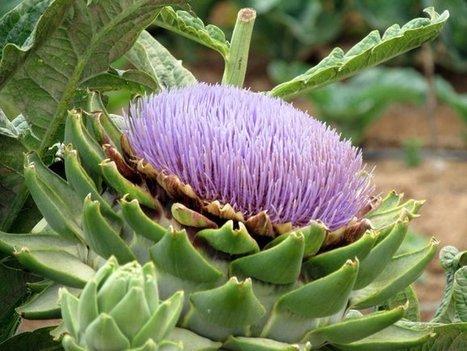 Organic garden, Valle de Guadalupe   Baja California   Scoop.it