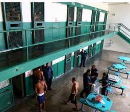 Perros detectan drogas y celulares en cárceles - El Nuevo Día | ¿Por qué muerden los perros? | Scoop.it