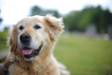 Pet Ownership Linked With Better Heart Health | Dog behavior | Scoop.it