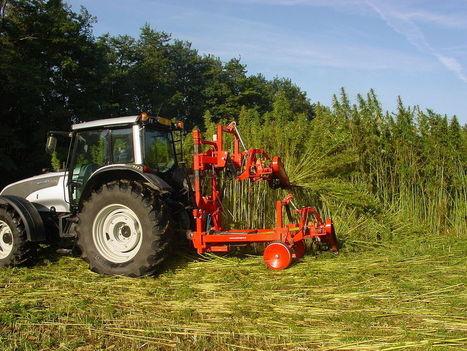 La culture du chanvre repart en Europe! | Chimie verte et agroécologie | Scoop.it