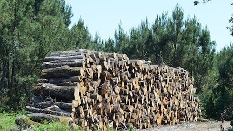 Un million de tonnes de bois en plus par an en France avec Dynamic Bois 2016 | Lettre Bioénergie International | Scoop.it