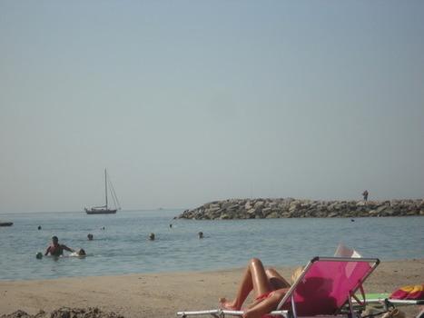 Météo des plages & méduses : retour en masse des méduses   méduses   Scoop.it