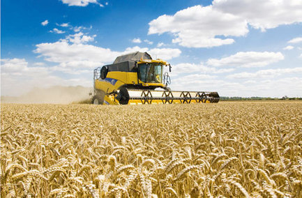 Rothamsted mention: Time to end stagnant wheat yields | BIOSCIENCE NEWS | Scoop.it