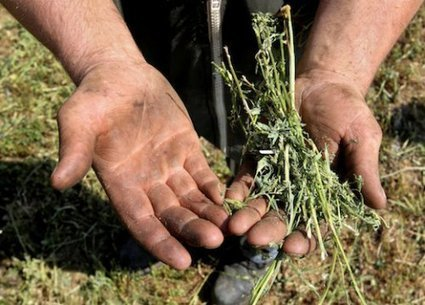 Censés nourrir l'humanité, ils vivent du RSA : portraits d'agriculteurs au bout du rouleau | Culture | Scoop.it