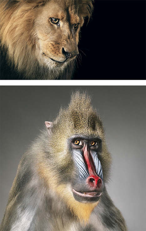 More Than Human: Photo Series by Tim Flach | Backstage Rituals | Scoop.it