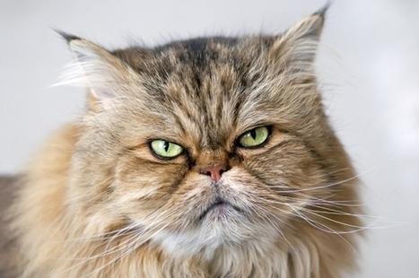 La terza età: come affrontare i cambiamenti comportamentali   Cat Club Elite News   Scoop.it