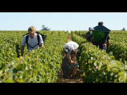 Vignes. Le soleil leur redonne du jus ! - Le Télégramme | Le vin quotidien | Scoop.it