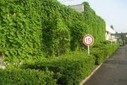 Kyocera Cools its Offices with Luscious, Edible Green Curtains | Sustainable Futures | Scoop.it