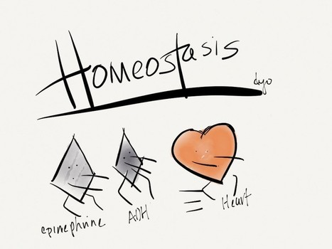 The Role of Hormones in Homeostasis Via Health Save Blog | Health Save Blog | Scoop.it