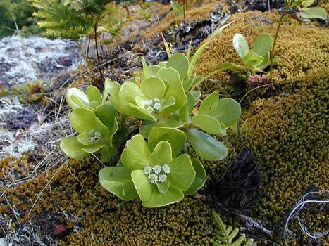 Papeete : Deux tiers de nos plantes endémiques menacés | Environnement et développement durable | Scoop.it