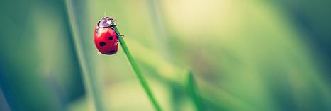 Lutte biologique : 18 animaux pour lutter contre les ravageurs au jardin | Education environnement | Scoop.it