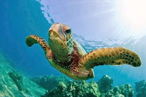Direct Traveller Blog - 10 Facts about North Cyprus Marine Turtles | James Anderson | Scoop.it