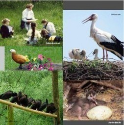 Permaculture : The True Story of Fagagna's Storks - Il Giornale delle ... | GBN News | Scoop.it