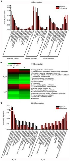 Genome-Wide Transcriptome and Proteome Analysis on Different Developmental Stages of Cordyceps militaris | Plant Genomics | Scoop.it