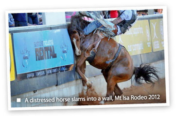 Help ban rodeo cruelty | TAKE ACTION | Nature Animals humankind | Scoop.it