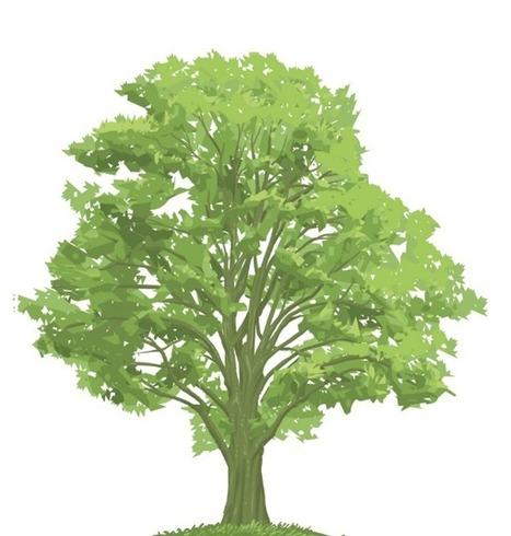 Top tree contractors at Hector Salas Tree Service of Pasadena | Hector Salas Tree Service of Pasadena | Scoop.it