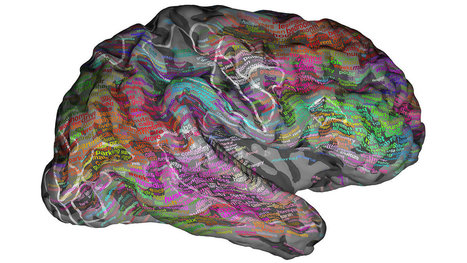 Storytelling Neuroscience: Scans Show Brains Groups Words By Meaning | Transmedia Storytelling meets Tourism | Scoop.it