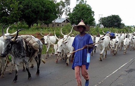 Fulani Herdsmen Sack Enugu Community,  48 Feared Killed | The Pulp Ark Gazette | Scoop.it
