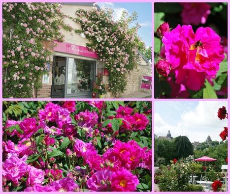 Provins et la rose | Cité médiévale de #Provins | Scoop.it
