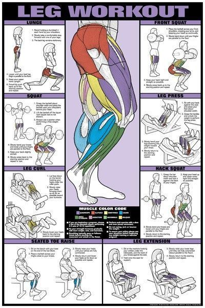 Leg Workout Infographic - TRAINING PROGRAMS/METHODS | CAC Senior HPE | Scoop.it