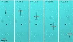 Sperm-inspired robots controlled by magnetic fields may be useful for drug delivery, IVF, cell sorting and other applications | Science technology and reaserch | Scoop.it