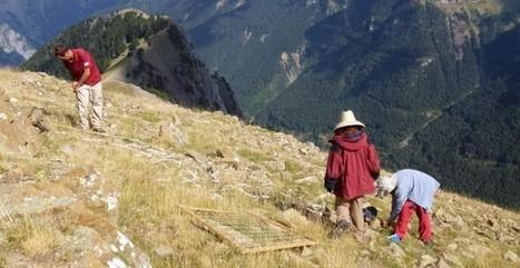 El cambio climático altera la vegetación de alta montaña en el Pirineo | Periodismo Ecológico Ambiental | Scoop.it
