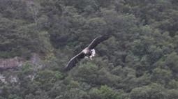 Aquila di mare, il fascino della natura selvaggia | Mondo Trekking | Scoop.it