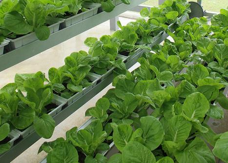 Faire pousser ses légumes sur un toit I Demain la Ville   culture hors-sol   Scoop.it