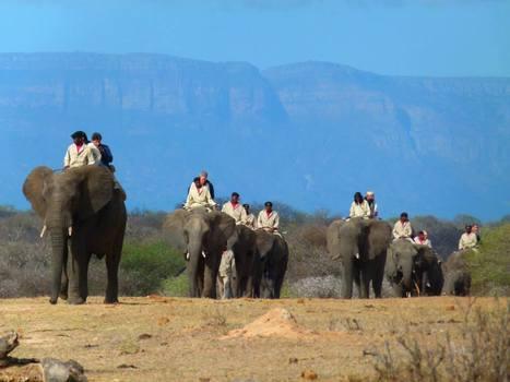Safari Rejser   Rejser Afrika   Scoop.it