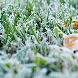 Predicting Frost: Organic Gardening | 100 Acre Wood | Scoop.it