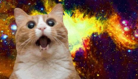 Animals & Content: What's the Deal With Cat Memes? - Business 2 Community   Best Cat meme   Scoop.it