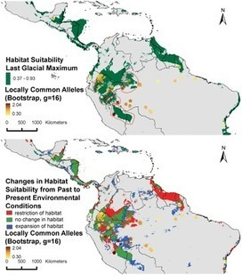 PLOS ONE: Present Spatial Diversity Patterns of Theobroma cacao L. in the Neotropics Reflect Genetic Differentiation in Pleistocene Refugia Followed by Human-Influenced Dispersal | Archaeobotany and Domestication | Scoop.it
