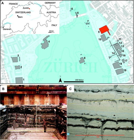SUISSE : Molecular and isotopic characterization of lipids staining bone and antler tools in the Late Neolithic settlement, Zurich Opera Parking, Switzerland | World Neolithic | Scoop.it