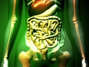 Discovery Kids :: Tell Me - Your Digestive System | Human Body Systems | Scoop.it