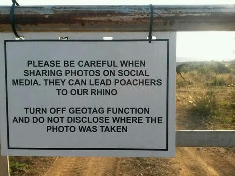 Geotagging proving fatal for endangered rhinos | What's Happening to Africa's Rhino? | Scoop.it