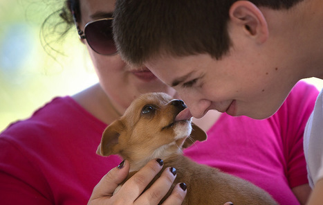 Report: Your pup's licks might boost your health | Palm Beach Post (FL) | CALS in the News | Scoop.it