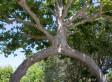 Huntington Botanical Gardens Warns of Super-Pest: Is Anybody Listening?   Annie Haven   Haven Brand   Scoop.it
