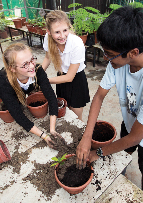 Planting partnerships   UWCSEA   International school in Singapore   Grade 5 Lend a Hand- Service and Action   Scoop.it