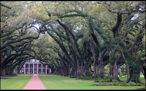 Vacherie | Oak Alley Plantation: Things to see! | Scoop.it