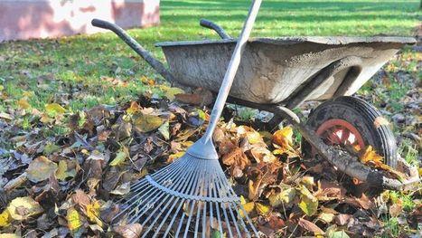 Jardin : vos feuilles mortes valent de l'or | pour mon jardin | Scoop.it