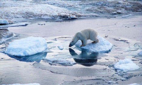 Polar Bear | Species | WWF | science conservation | Scoop.it