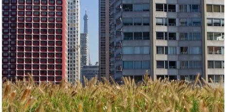 Municipales 2014 : vers un Paris vert et piétonnier pour Anne Hidalgo - Le Nouvel Observateur   Toiture terrasse végétalisée   Scoop.it